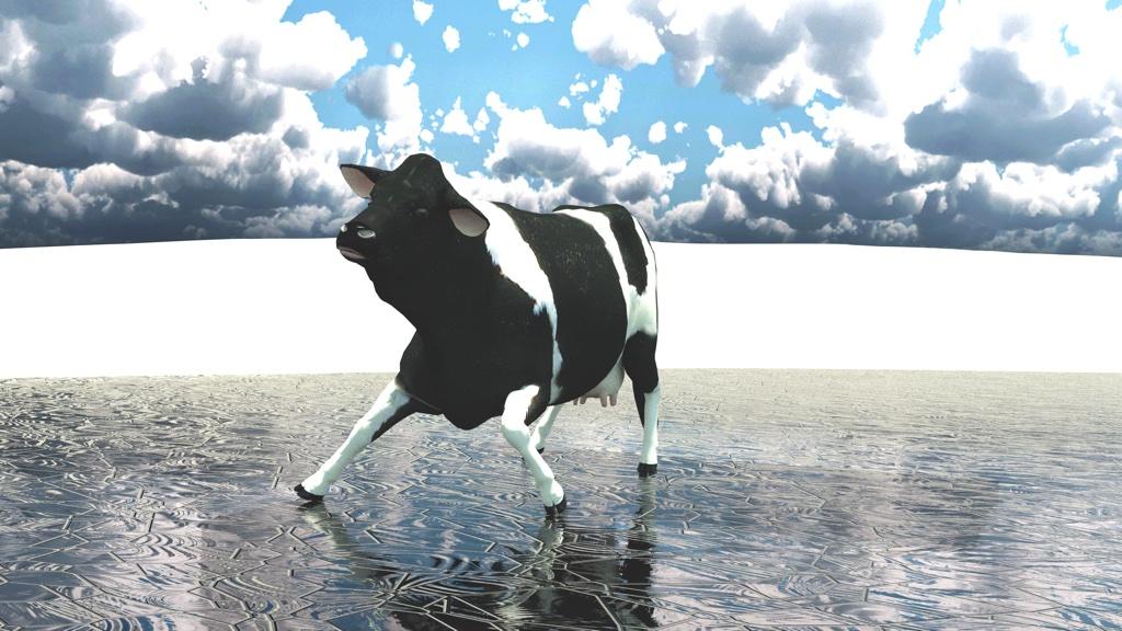 Kuh vom Eis holen